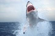 Также акул привлекают хорошие волны. // nationalgeographic.com
