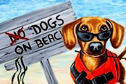 Пляжи для собак открываются в Италии. // blogspot.com