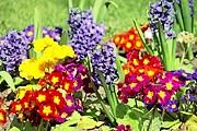 Чехия приглашает на прогулку в свои сады. // freefoto.com