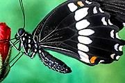 На выставке можно понаблюдать за разными видами бабочек. // fantom-xp.com