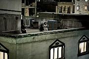 Кричащие с крыш в Тегеране. Пьетро Мастурцо. // lenta.ru