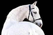 За здоровьем лошадей будут следить специалисты. // Tim Platt