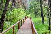 Новый маршрут проходит через болотистый лес. // powiat-wloszczowa.pl