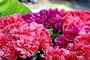 Праздник цветов пройдет во Франции. // linternaute.com