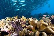 Малайзия пытается спасти свои кораллы. // David Fleetham