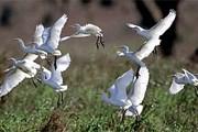 В парке живет множество птиц. // ugandagorillasafaritours.com