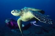 Чтобы увидеть подводный мир Гавайев, не нужно погружаться на глубину с аквалангом. // iStockphoto