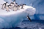 Антарктида – царство пингвинов и вечных льдов. // iStockphoto