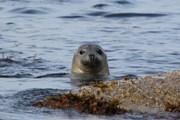 Незабываемым приключением станет плавание с тюленями. // stromsholmen.no