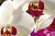 В рамках фестиваля тропического леса пройдет выставка орхидей. // kew.org