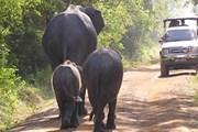 Парки Шри-Ланки посещает все больше туристов. // holidaysinsrilanka.net
