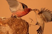 Множество туристов собираются на Фестиваль миграции птиц. // Thomas Krumenacker