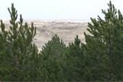 Херсонский искусственный лес находится посреди степи. // khersoncity.com
