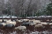 Сейчас на бывшем полигоне пасутся овцы. // dw-world.de