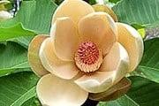 В парке собраны уникальные растения со всего мира. // magazine.fabriquerenfrance.com
