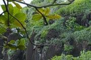 Доминикана - рай для любителей экотуризма. // realadventures.com