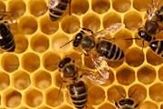 Пчёлы отеля будут делать правильный мёд. // sciencedaily.com