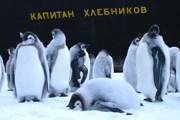 Поездка на ледоколе принесет незабываемые впечатления. // vostokmedia.com