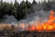 Пожар на Ибице не угрожает туристам. // efeverde.es