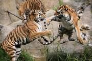 Зоопарк - один из крупнейших в Европе экологических центров. // dublinzoo.ie