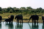 Экологи считают, что слонам наличие заборов только повредит. // Travel.ru