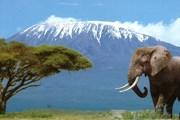 Кения познакомит с дикой природой. // safarisonline.co.uk