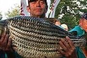 Тигровая рыба опасна даже для самих рыбаков. // eturbonews.com