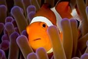 Туристы могут поплавать с подводными обитателями. // iStockphoto