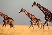 Намибия предлагает интересный и разнообразный отдых. // iStockphoto / Mogens Trolle