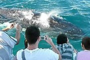 Туристам нравятся киты. // frasercoastchronicle.com.au