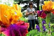 Посетители увидят разнообразные сорта цветов. // flowerlib.ru