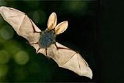 Летучих мышей поселят в парках и зеленых кварталах. // wlgdh.com