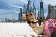 В Объединенных Арабских Эмиратах чтут традиции. // iStockphoto / Cherkas