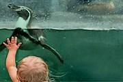 Парк предлагает поплавать с пингвинами. // spreewelten-bad.de