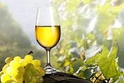 Посетители смогут попробовать лучшие чешские вина. // lidovky.cz
