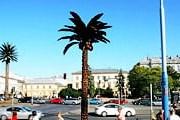 Шоколадная пальма появилась в Варшаве. // warszawa.pl