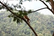 Экотуризм - одно из направлений отдыха на Шри-Ланке. // iStockphoto