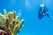 Коралловый риф привлечет дайверов. // GettyImages