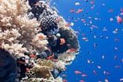 Карибские кораллы нуждаются в защите. // iStockphoto