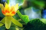 Посетителям расскажут об уникальном растении. // kin-norway.livejournal.com