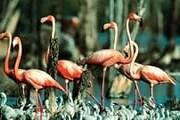 Туристы увидят редких птиц. // buenolatina.ru