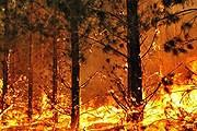 В Австралии - самые сильные за последние 40 лет пожары. // radioaustralia.net.au