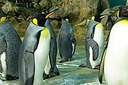 Пингвины в парке Jurong // birdpark.com.sg