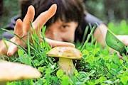 Туристы отправятся собирать грибы. // aramar.com