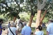 Туристы узнают все о пробковых деревьях. // retecork.org