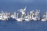 Природа Алтая привлекает туристов. // visitaltai.info