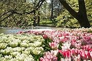 Парк откроется 20 марта. // keukenhof.nl