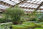 Ботанический сад в Санкт-Петербурге - старейший в России. // wikipedia.org