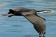 Малави - одно из лучших мест для наблюдения за птицами. // malawitourism.com