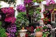 Туристы увидят цветущую Андалусию. // cordoba.costasur.com